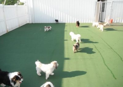 kennel may 055