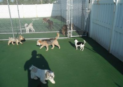 kennel may 057