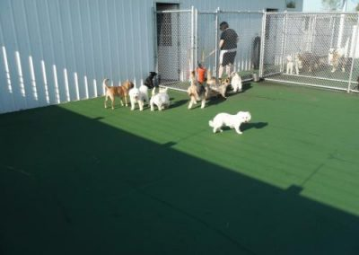 kennel may 060